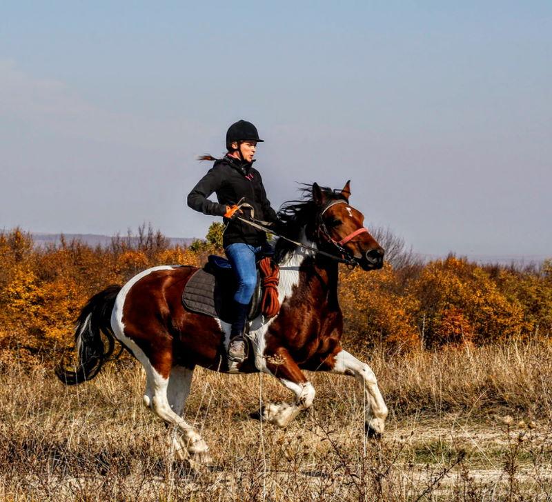 Ausreiten mit dem Pferd im Herbst
