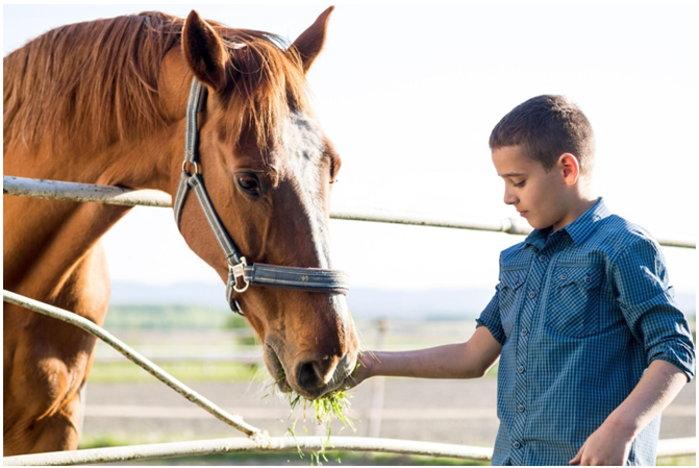 Die richtige Ernährung für Pferde