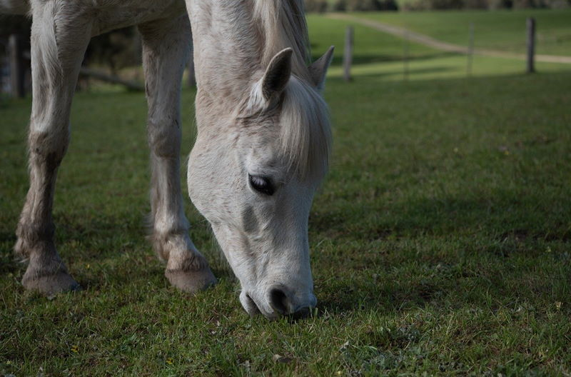 Pferd auf einer Wiese mit gesunden Kräutern