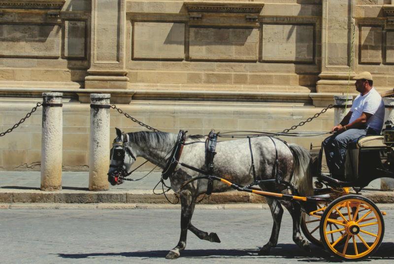 Städtereisen mit dem Pferd in Deutschland