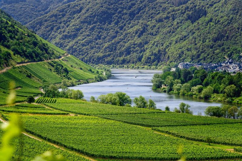 Mosel, Rhein, entspannter Urlaub, wein genießen
