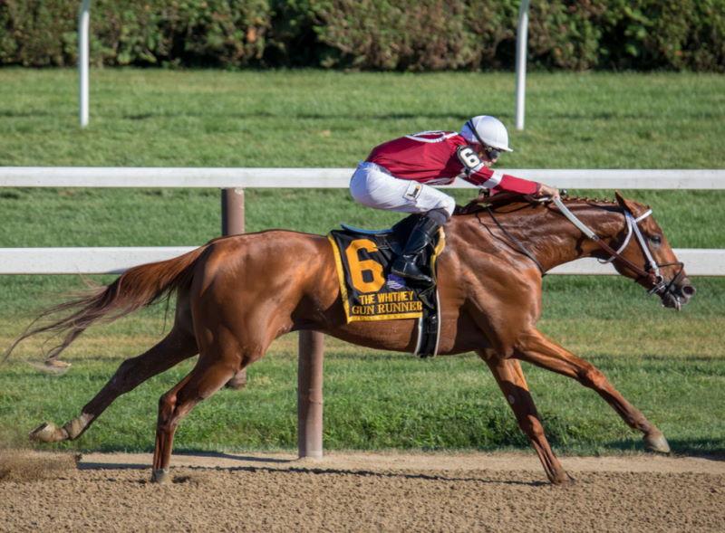 Pferde Wettrennen