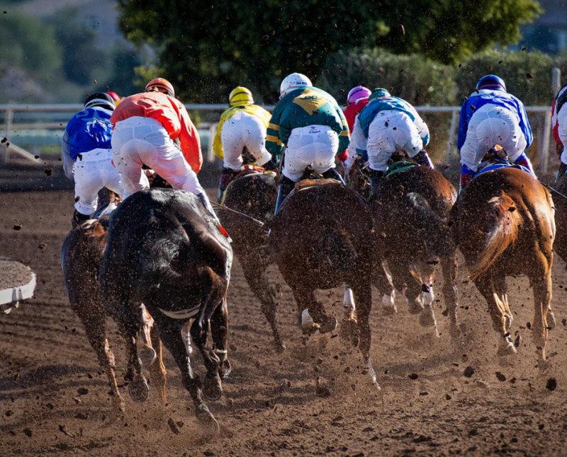 Pferde auf der Pferderennbahn