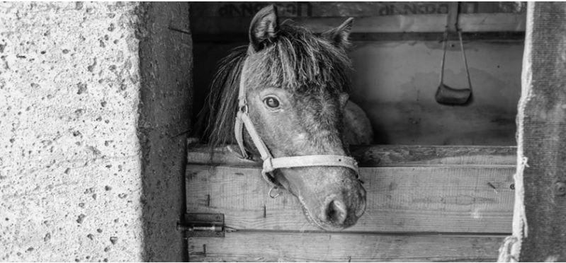 Pferd im Winterstall