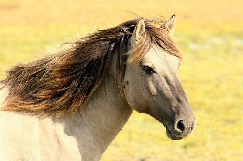 Spieltrieb bei jungen Pferden