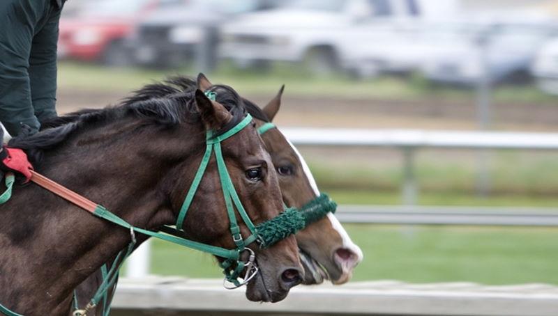 im Schnitt stirbt pro Rennen ein Pferd