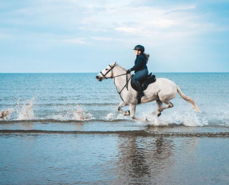 Pferde reiten am Meer
