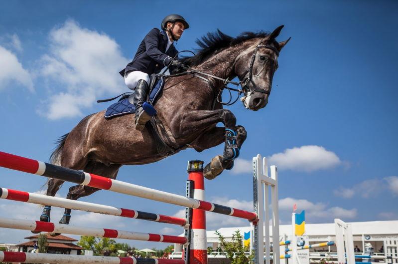 Instagramm Pferderennen - Pferdewetten