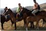 Linkeinträge rund ums Pferd, Reiter, Reiten, Reiturlaub, Reitsporthandel & Reitsporthändler