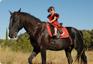 Online-Pferdebranchenbuch mit Adressen rund ums Pferd, Reiter, Reiten, Reitsporthandel & Reitsporthändler