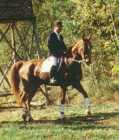 Hilfen beim Reiten mit dem Pferd, Pony