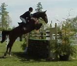 Hindernisse im Reitsport für Pferde und Ponys