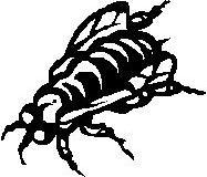 Eine durch Fliegeneier schlecht heilende Wunde nennt man