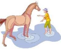 Was ist das beste Mittel, um ein ängstliches Pferd zu beruhigen?