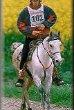 Was muss ein im Distanzreiten eingesetztes Pferd nicht unbedingt können/haben?