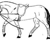 Was trägt das Pferd auf der nebenstehenden Zeichnung?