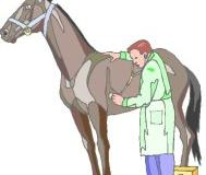Wenn ein Pferd Kolik hat