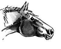 Wenn ein Pferd seine Ohren nach vorn aufgestellt hat, aufmerksam lauscht und schaut, bedeutet das: