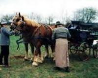 Wo hält/halten der/die Beifahrer die Pferde am Ort?