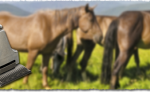 Cutli Pferde-Schermaschinen