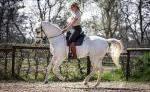 Pferd als Freund - Klassisch Reiten
