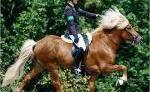 Reitsport- und Pferdebedarf Cora Röther