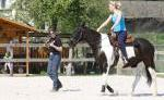 Absarokee Horse Farm - Weserbergland