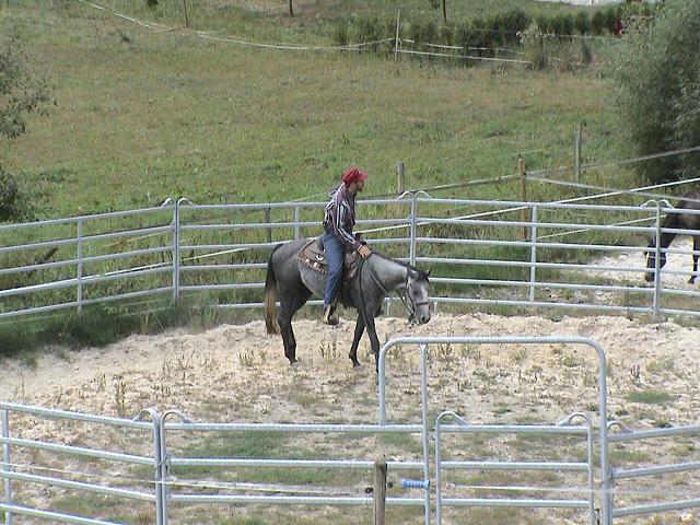 Ausbildung der Pferde