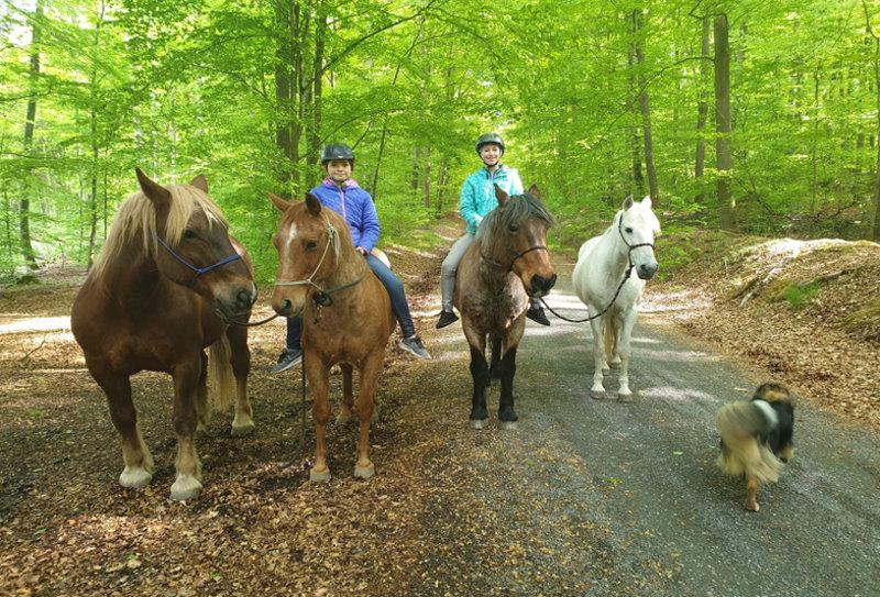 Ausreiten mit dem Pferden im Steigerwald