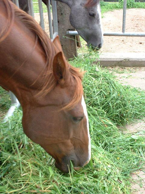Haltung der Pferde