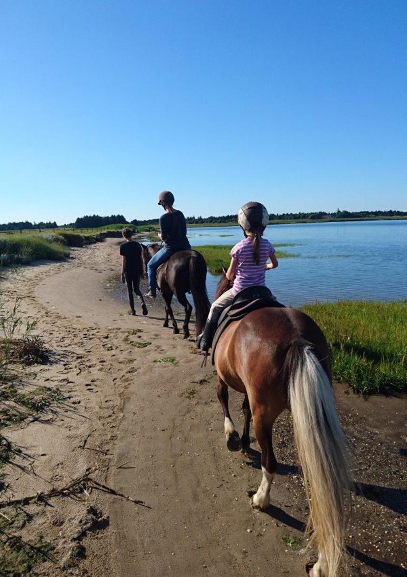 Ruhiger Spaziergang entlang des Wattenmeeres