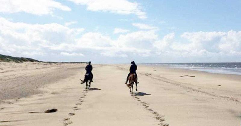 Galoppieren zwischen den Dünen und der Nordsee