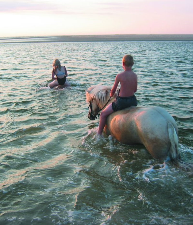 An einem heißen Sommertag gemeinsam mit den Pferden in der Nordsee schwimmen