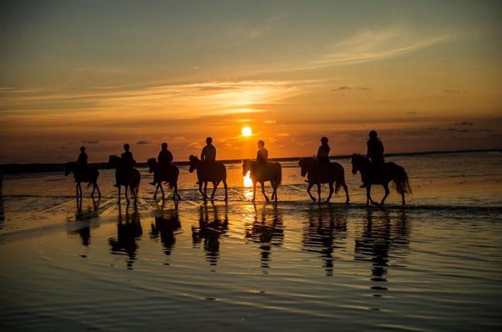 Reiterferien an der Nordsee