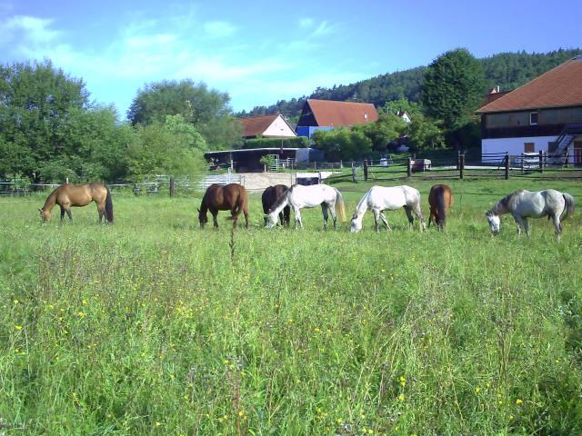 Wanderreiten in Bayern
