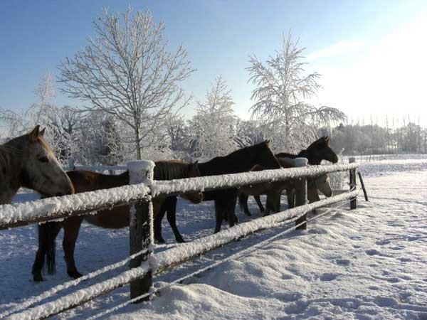 Reiten macht auch im Winter Spaß!