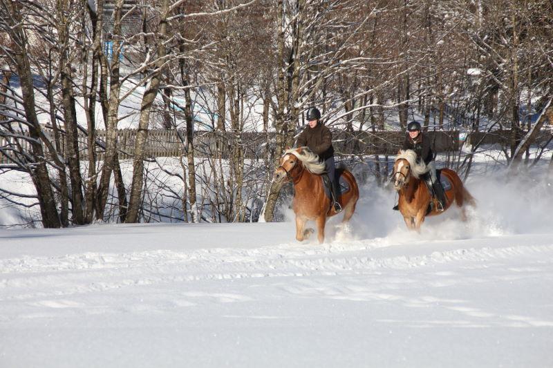 Reiten mit Haflinger in die Schneelandschaft