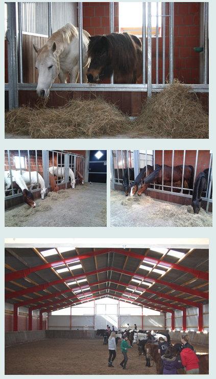 Reiterhof, Stallungen und Pferde
