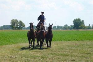 Reiturlaub in Ungarn: hier kann man etwas erleben