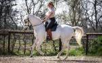 Klassisch Reiten - Pferd als Freund
