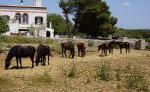 Petit Russó - Reiturlaub auf Menorca