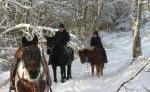 Reitunterricht und Wanderritte in der Oberpfalz, auch für Anfänger