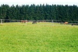 Weiden und Ausreitgelände