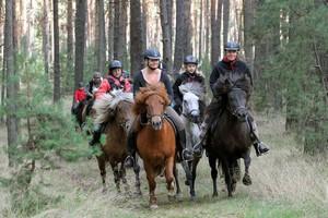 Reitangebote für erfahrene Reiter