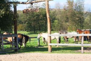 gutmütige und gutgerittene Quarter-, Paint- und Appaloosa Horses stehen für euch für den Westernreitunterricht bereit