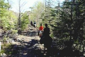 Abenteuerritte durch unsere Naturwälder in chile