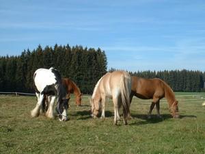Pferdekoppel für glückliche Pferde