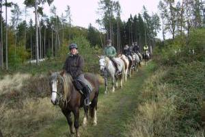 Ausreiten über Felder und Wiesen - Reiten im Taunus