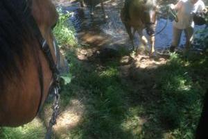 Reiten im Gelände ist auch für die Pferde ein Abenteuer