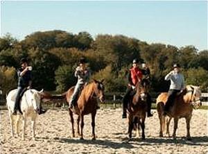 Pferde als Partner in der Balance des Lebens